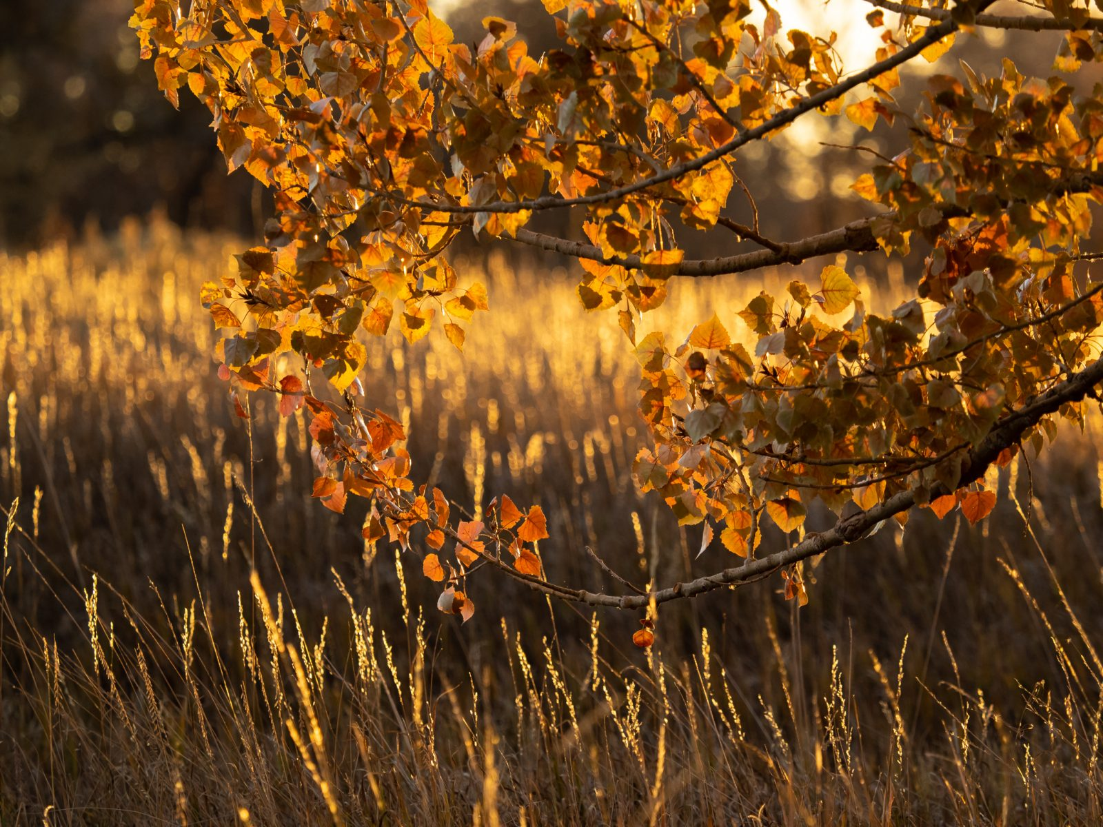 Autumn Grasses and Leaves