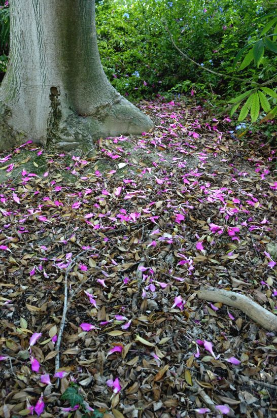 Fallen Silk Foss Tree Blossoms