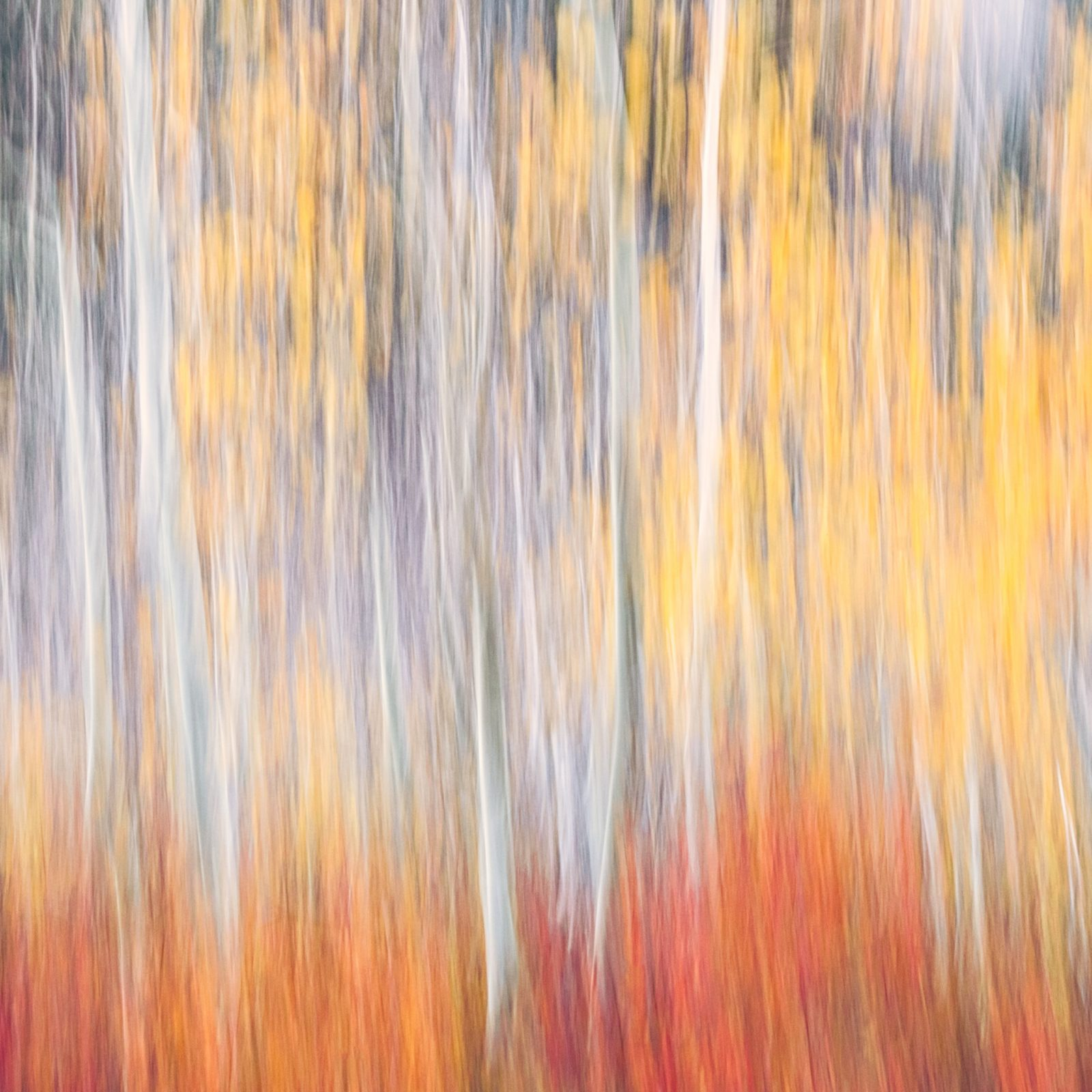 Autumn in Abstract