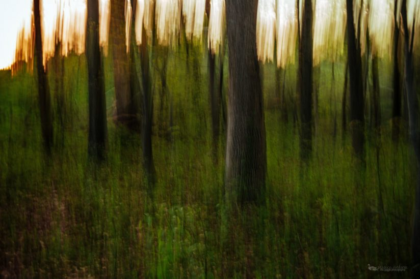 Panning Forest