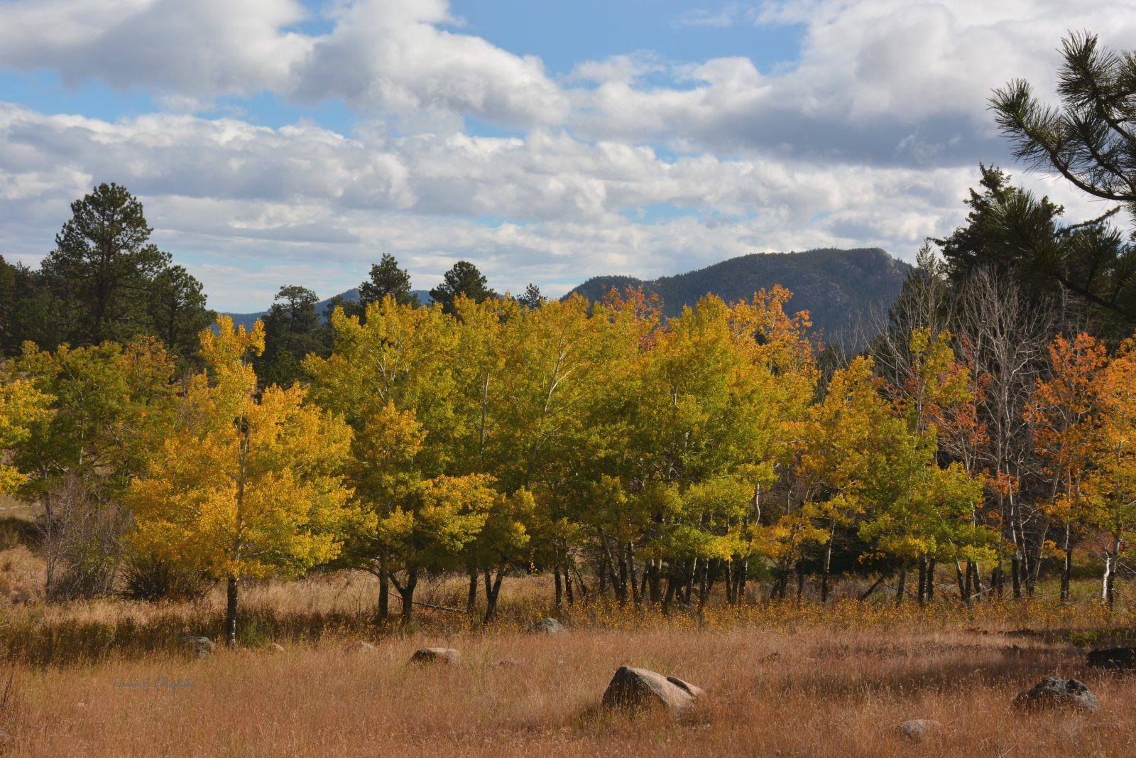 Fall Meadow