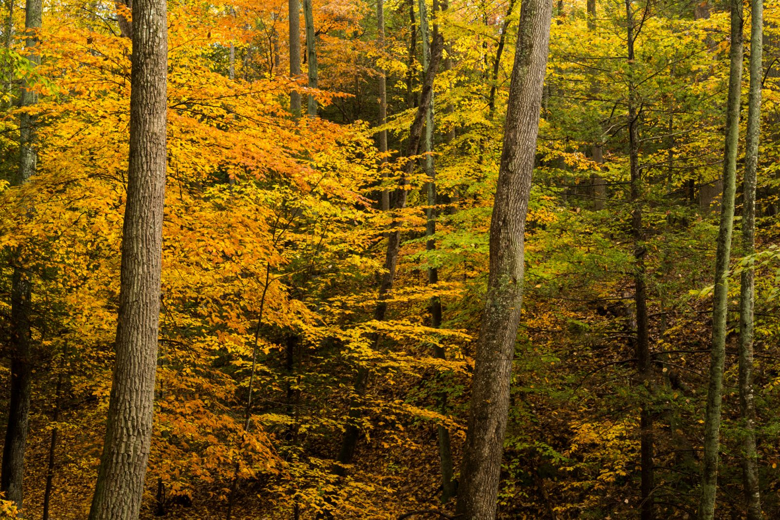 Autumn Color of the Forest