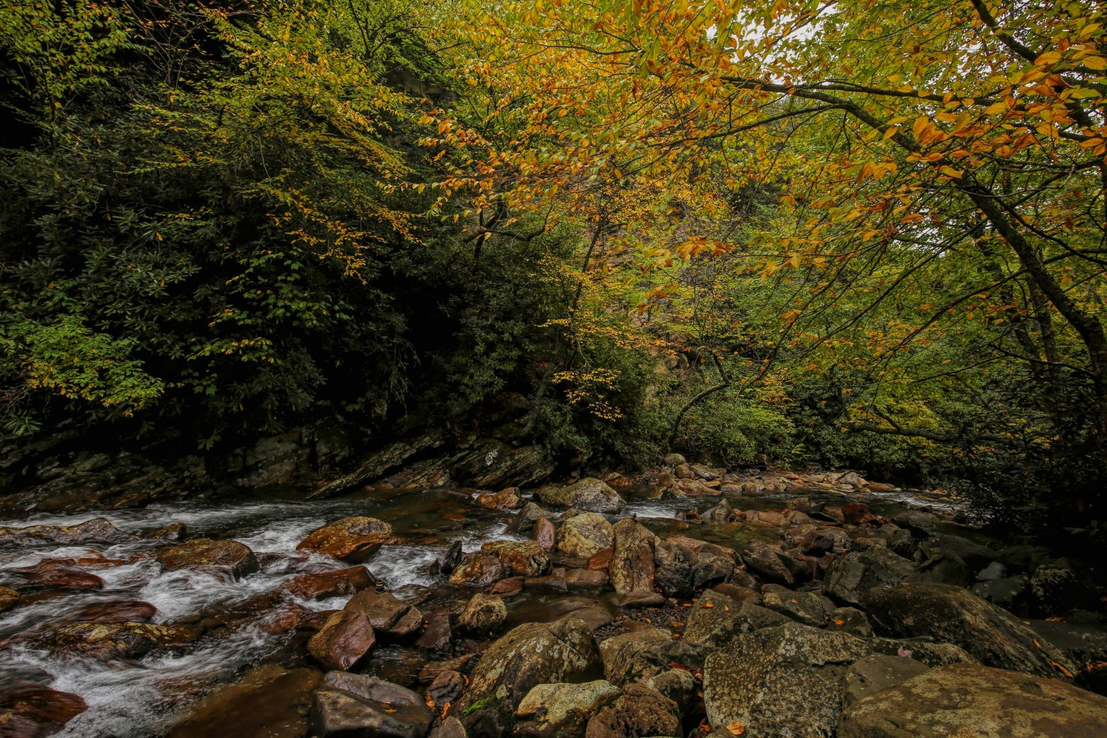 Smoky Mountain Rapids and Fall Colors
