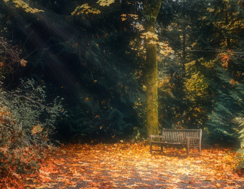 An Inviting Bench