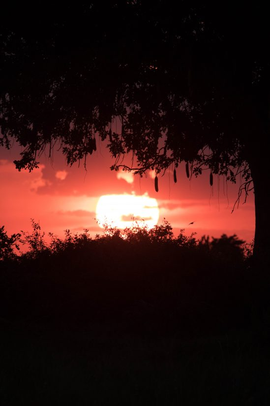 Okavango Delta Sunset