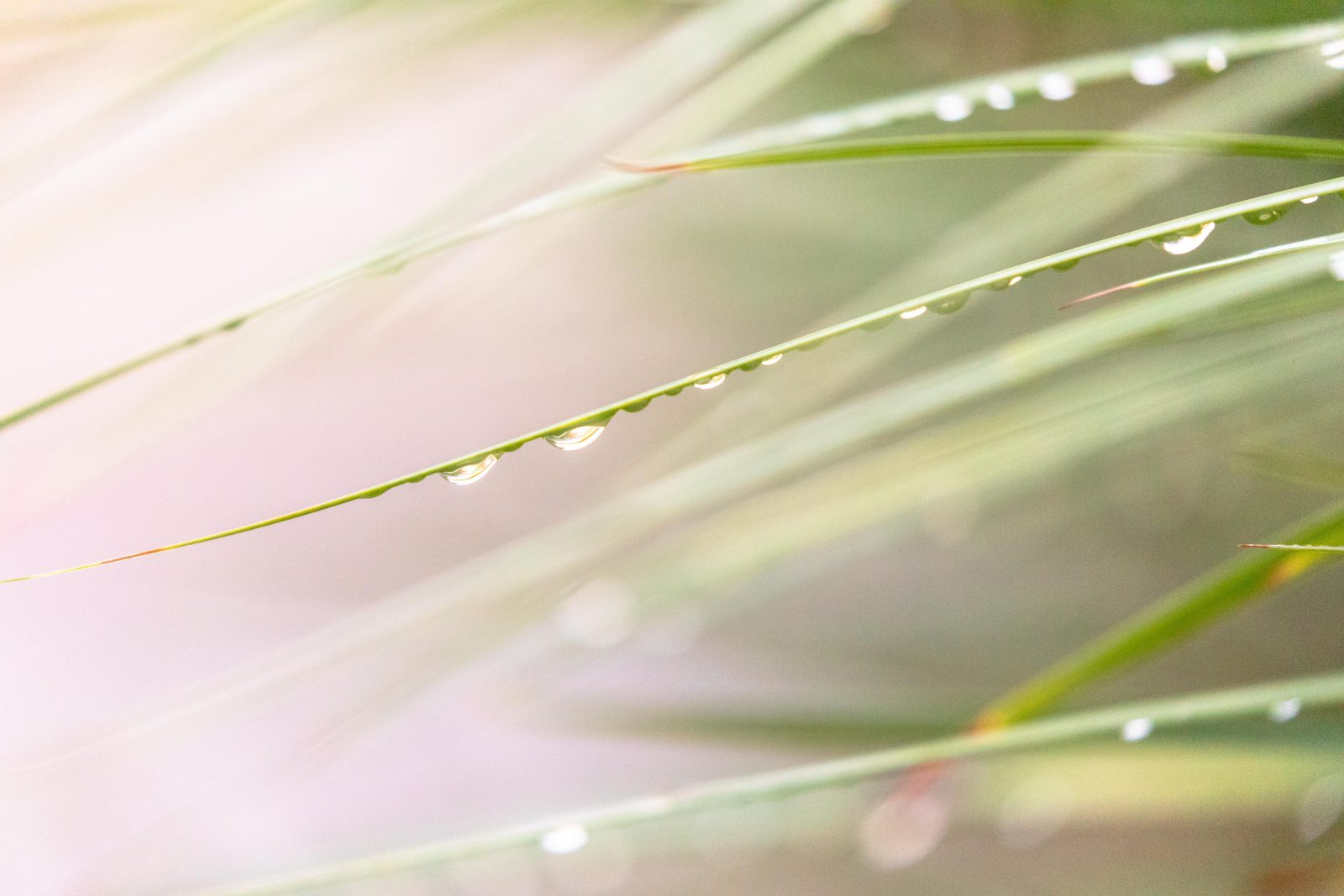 Wet Grass Abstract