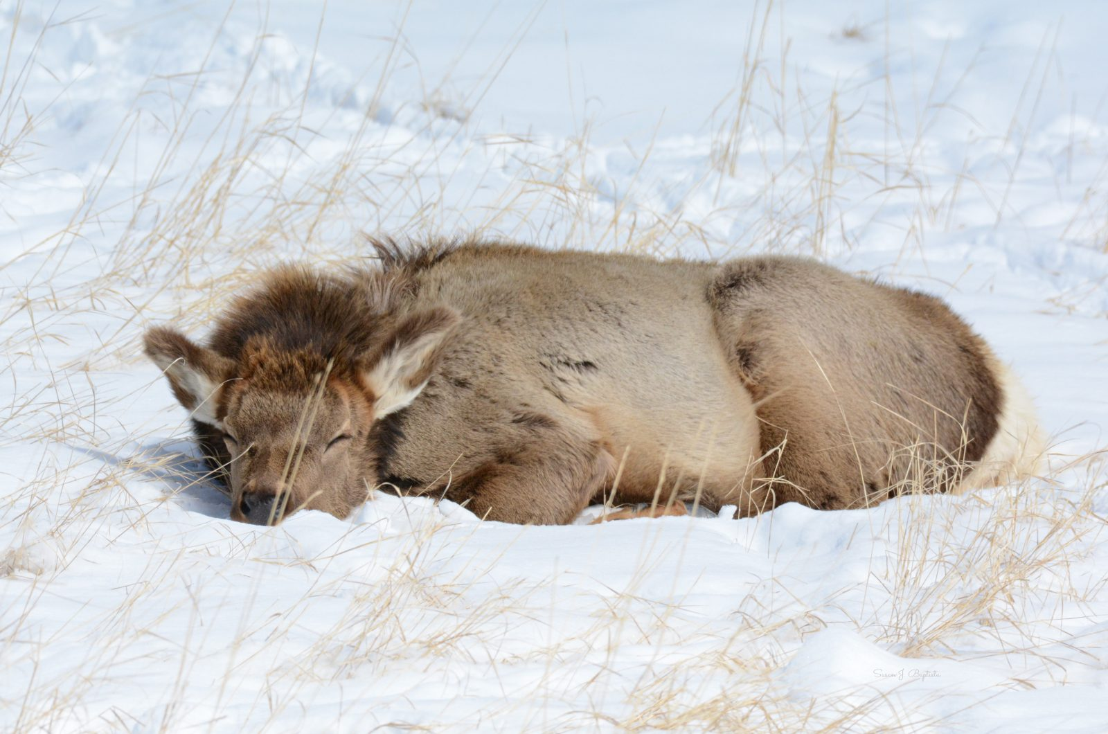 Napping In The Snow