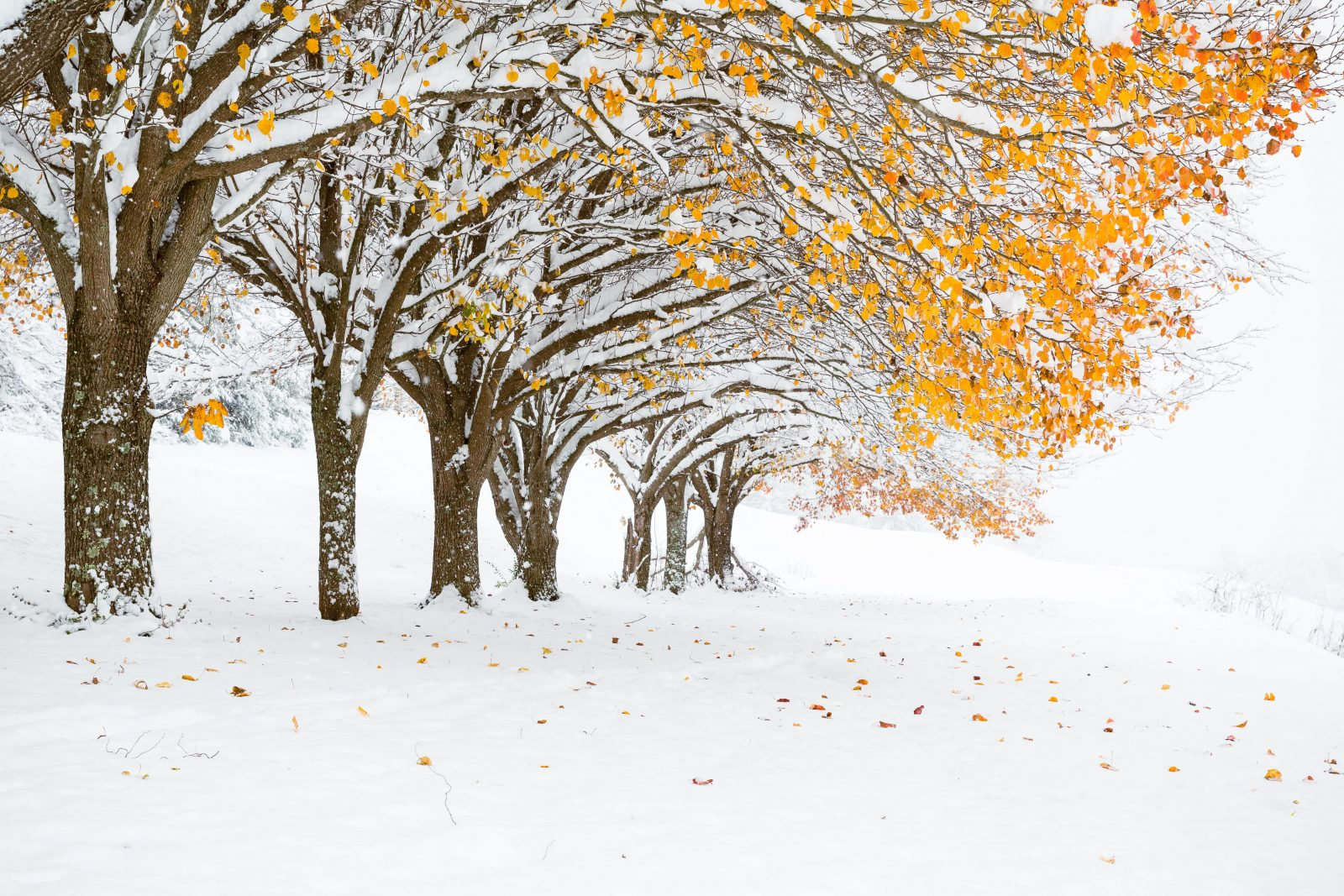 From Fall to Winter