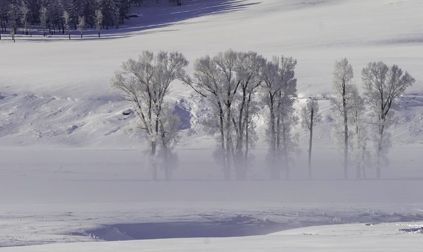 Winter Fog Reflections