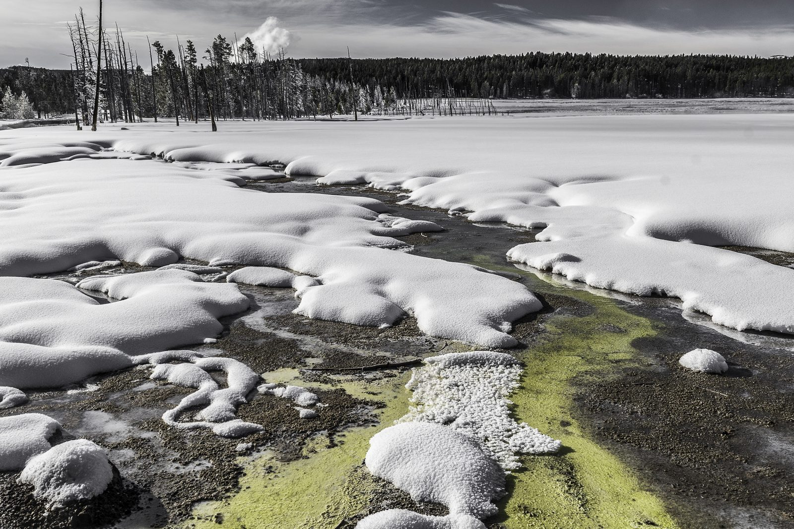 Carpet of Snow at the Lower Geyser Basin, Yellowstone