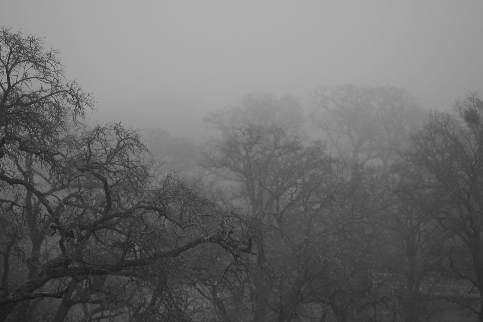 Foggy Winter Morning in Comanche Hills