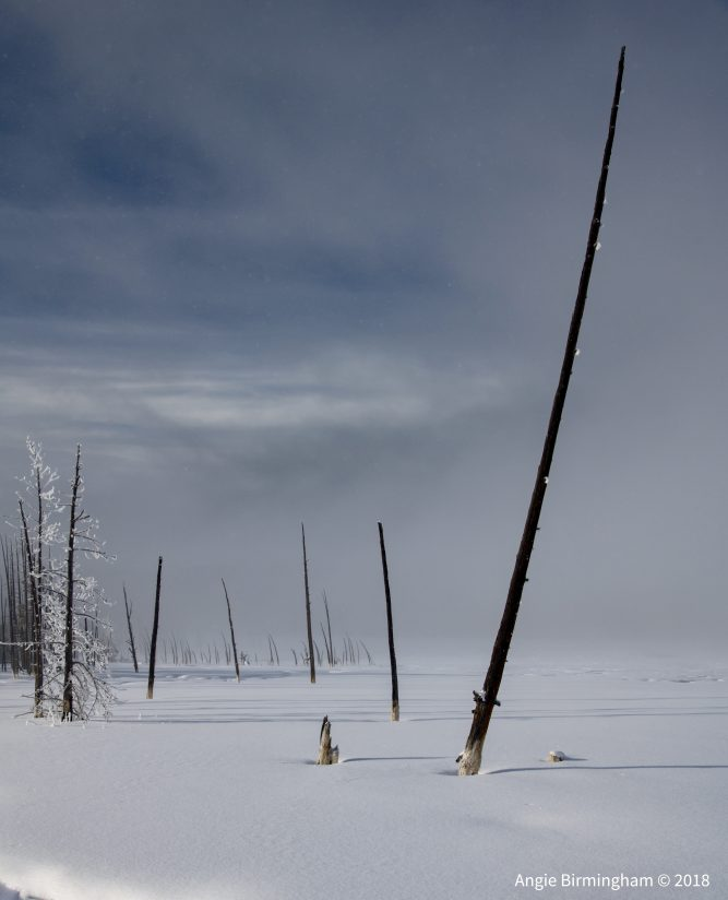 Remnants of the 1988 Yellowstone fire