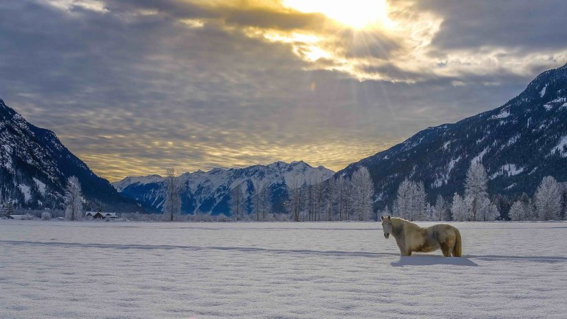 The lonely horse in deep snow in the mountains