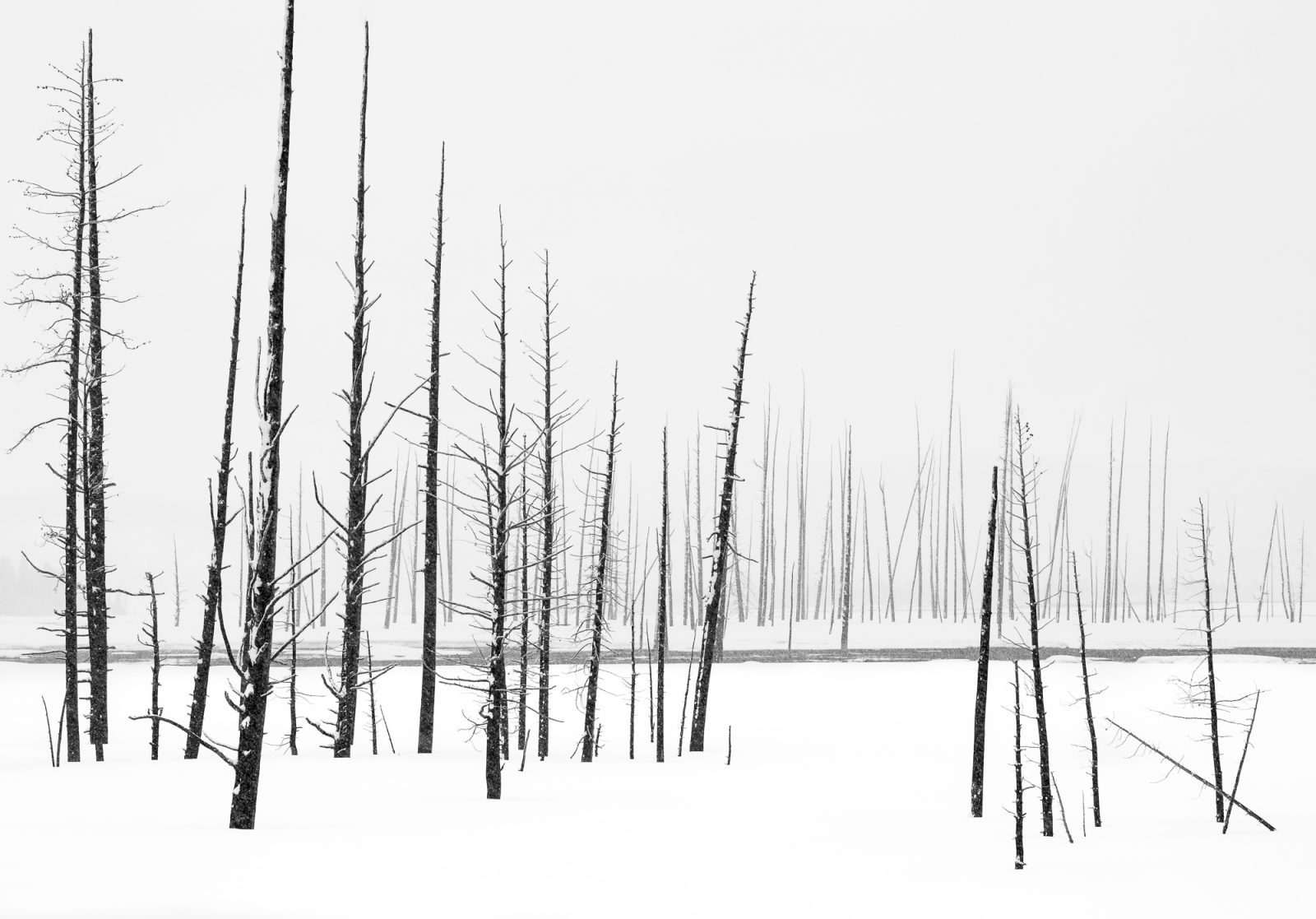 Ghost Trees in Winter