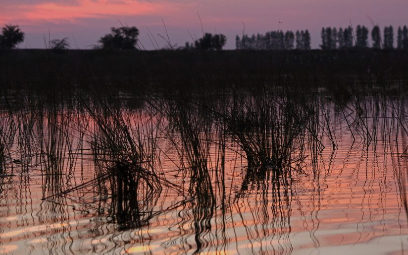 Reflection of reeds