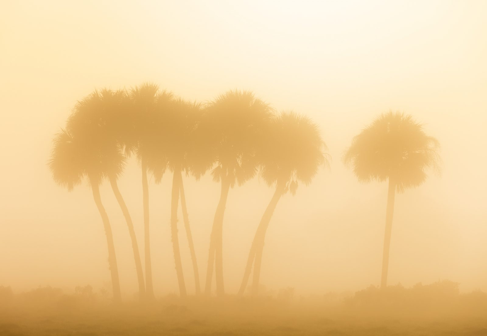 Sables in the Mist