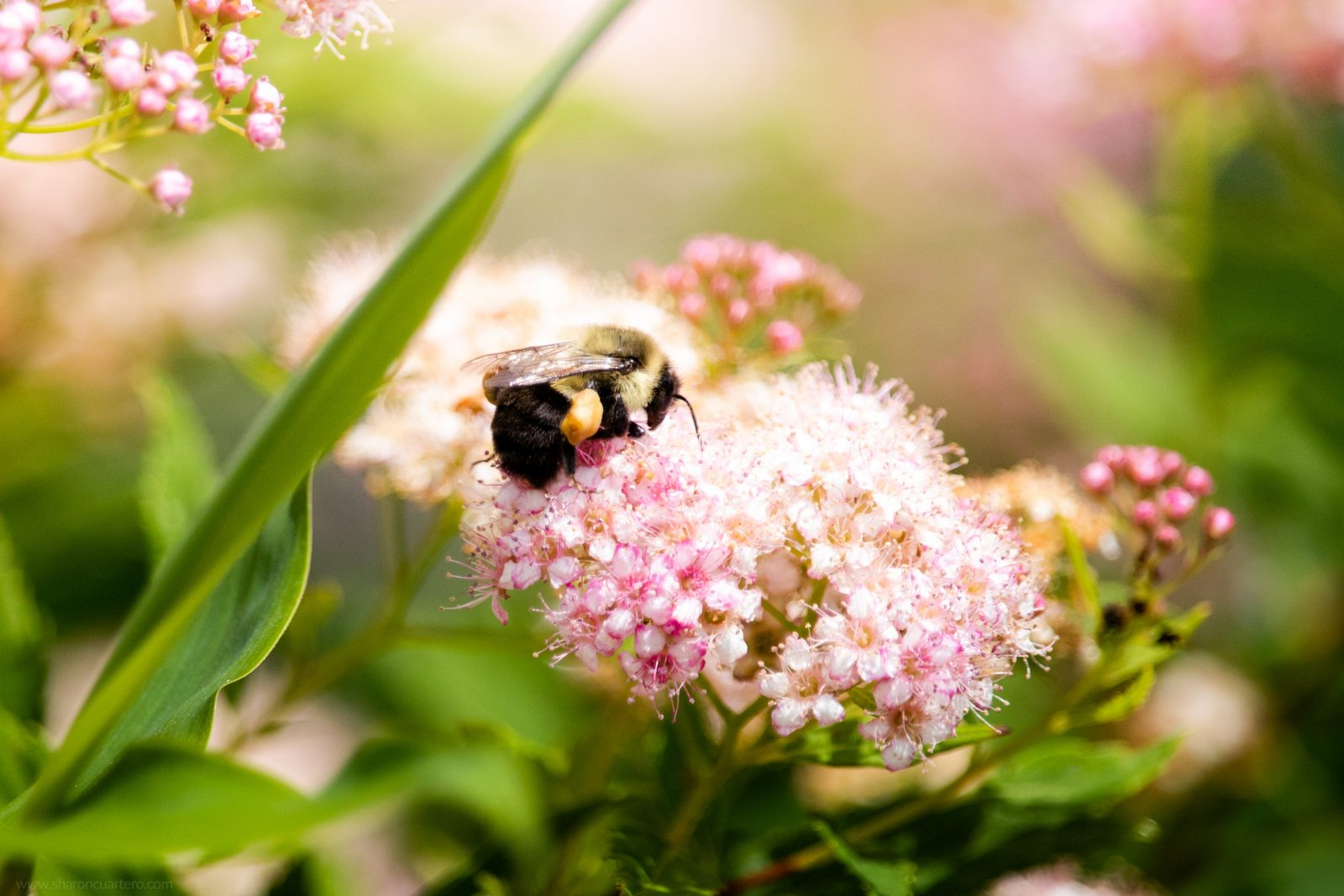 Spring Bee