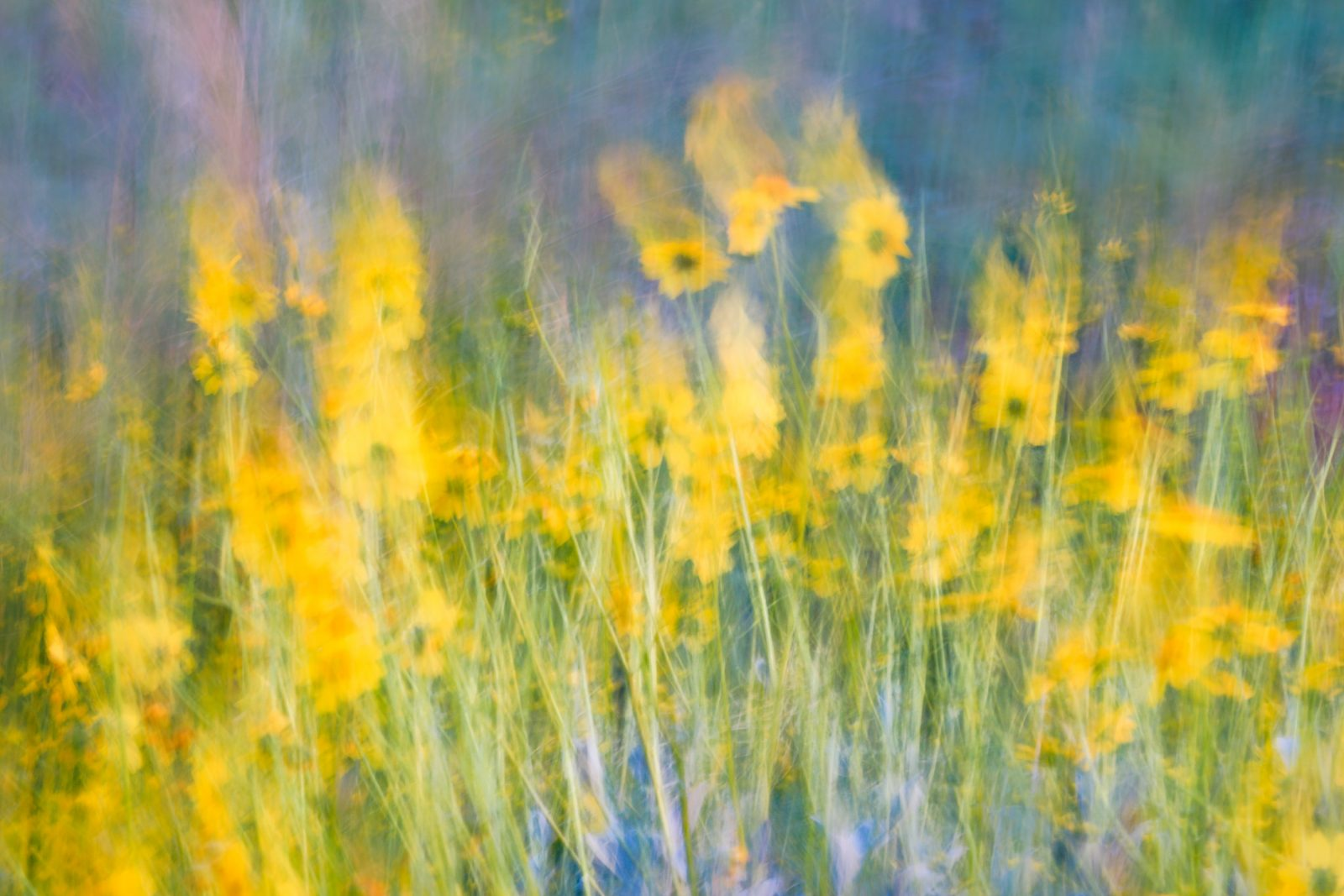 Spring Wildflower Abstract