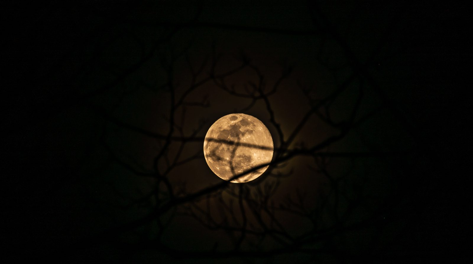 Super Moon of February 2019