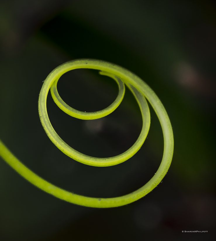 Nature's Loops