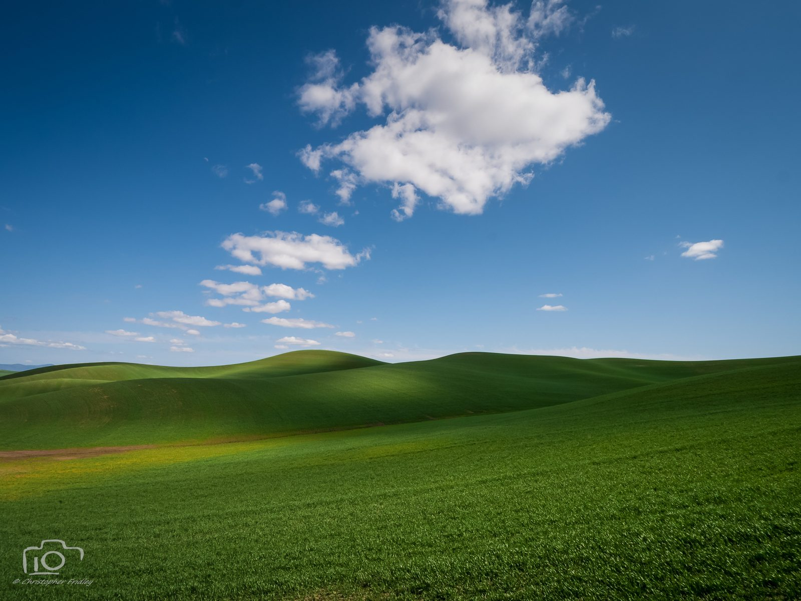 Palouse Wheatfields