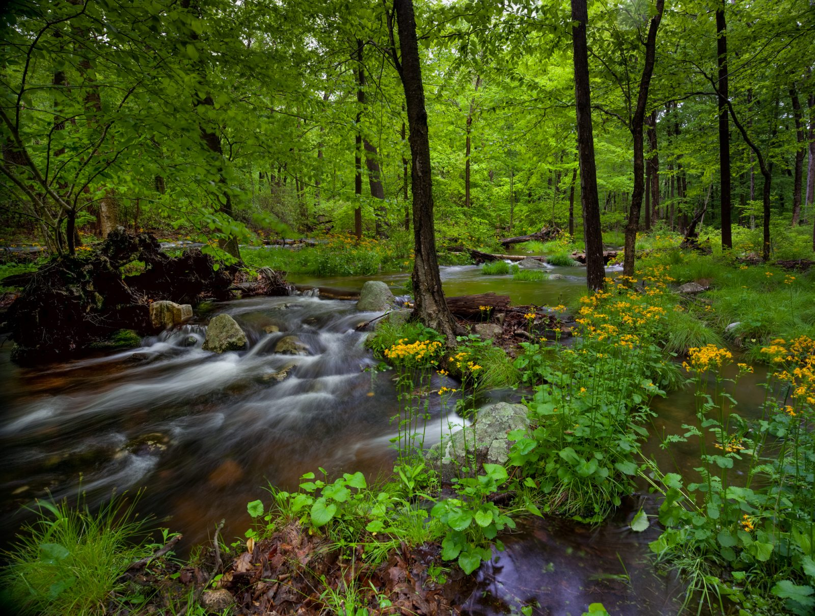 Lush Life in the Forest