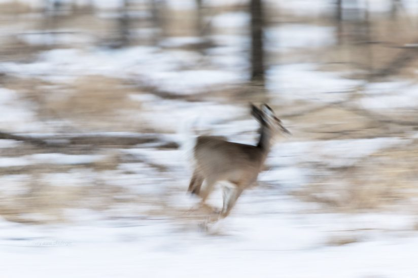 Deer Run_Abstract