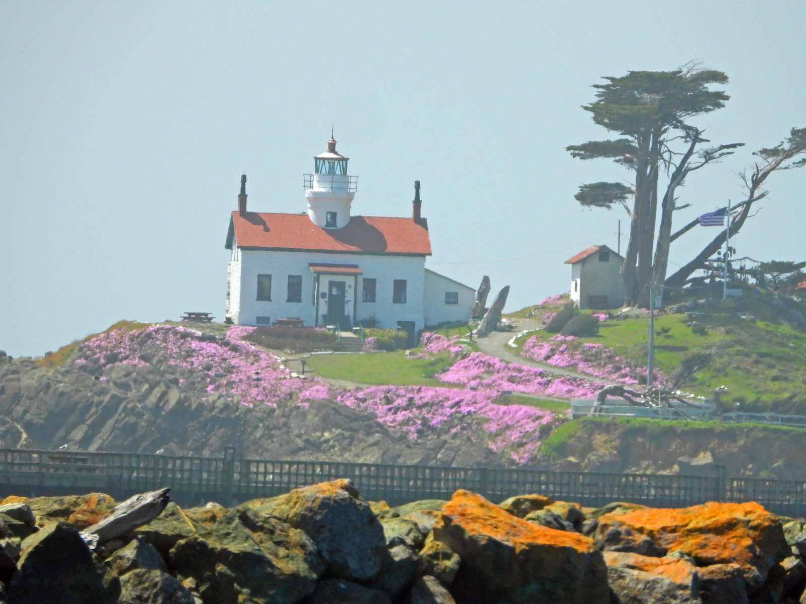 Lighthouse Flowers