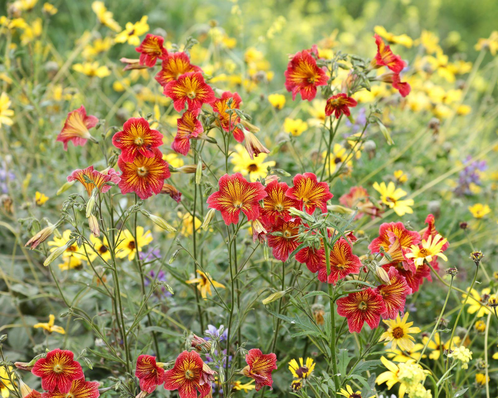 Red and Yellow Flower Mix