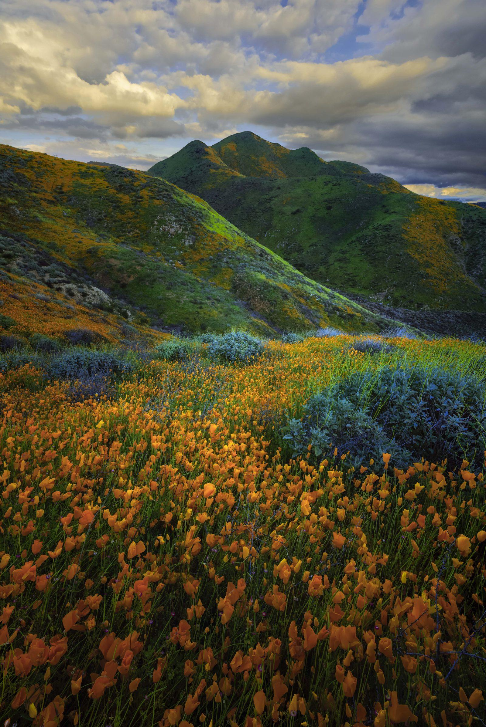 Walker Canyon Super Bloom