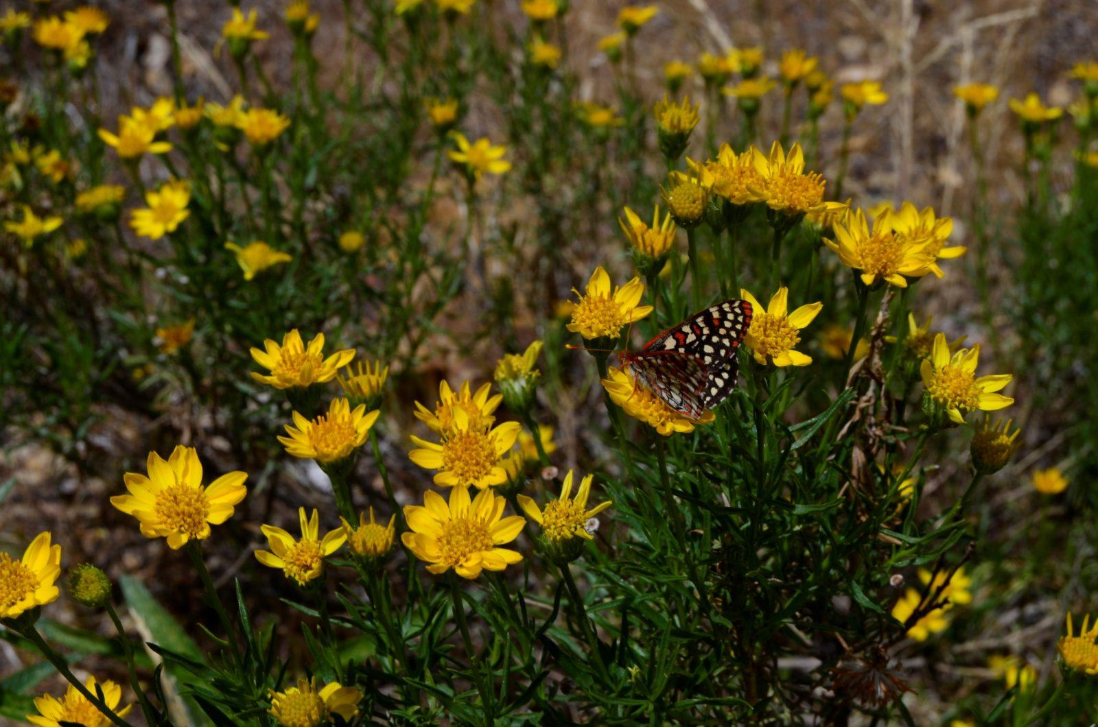 Yellow Flowers and Butterfly