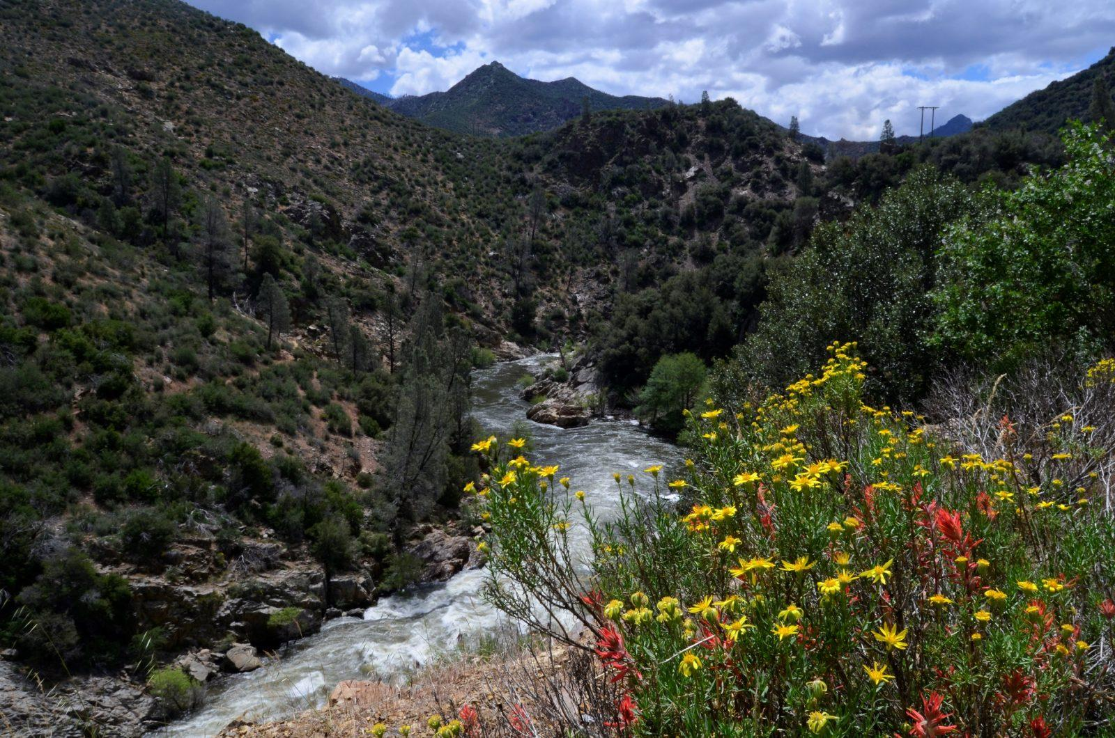Wildflowers Above The Kern River