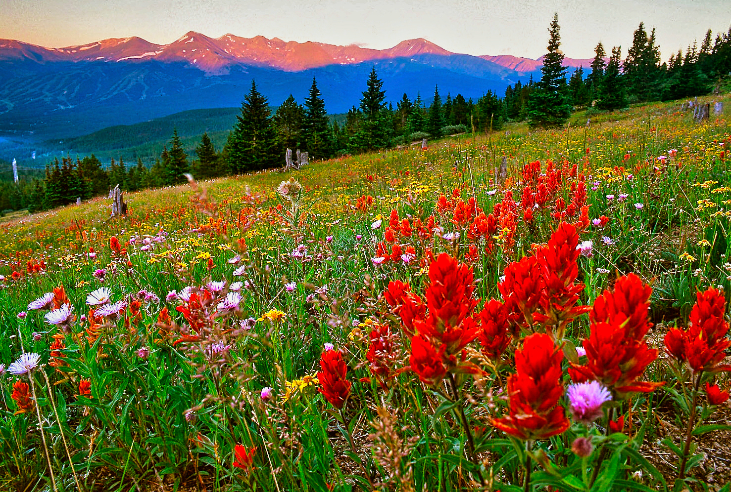colorful meadows