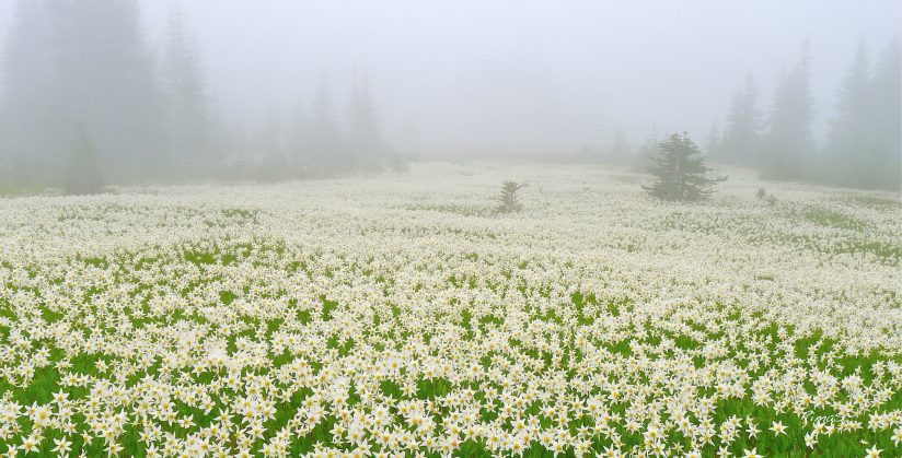 foggy blanket