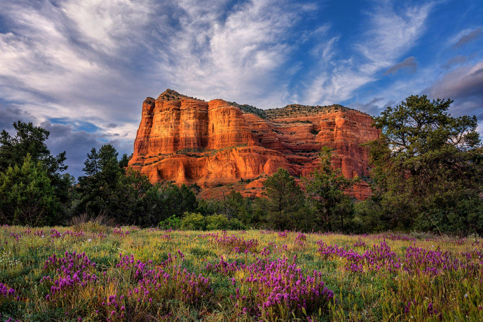Courthouse Butte Wildflowers