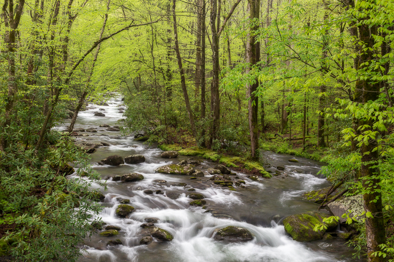 Spring Stream in the Smokies