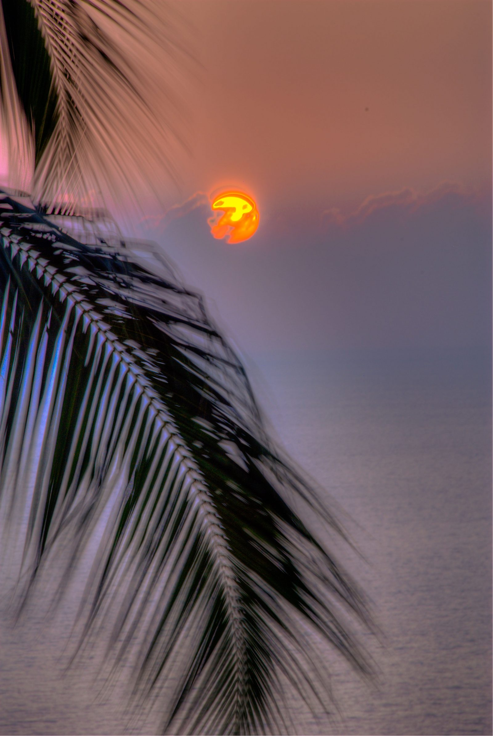 Kona Sunset through Palm Branch