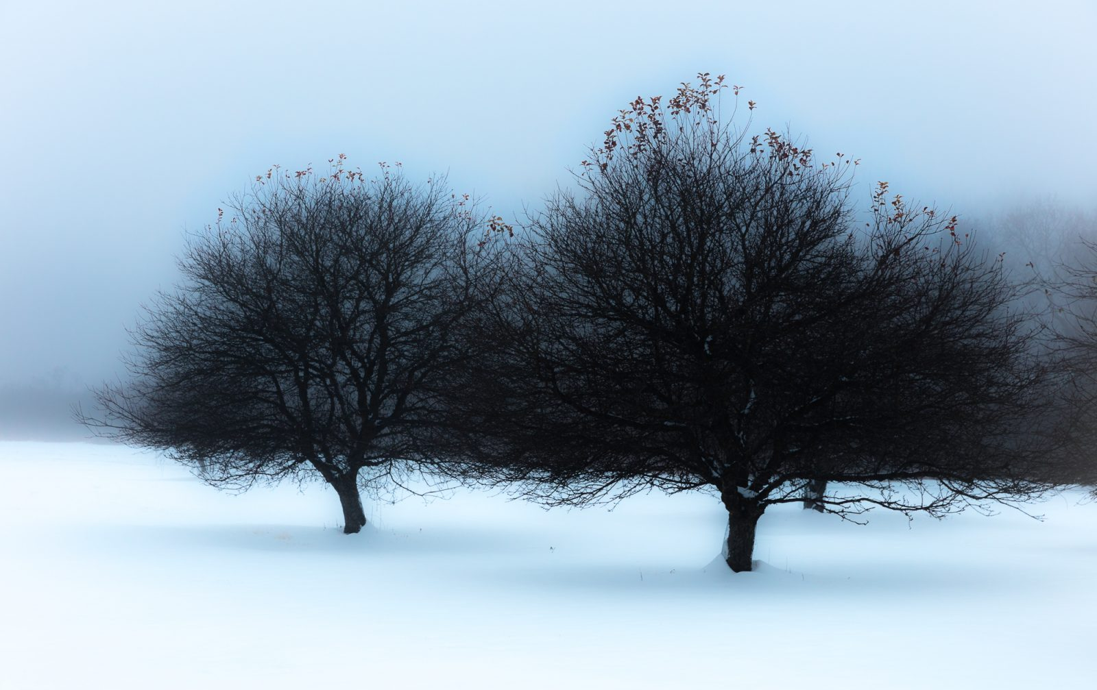 Two Trees..