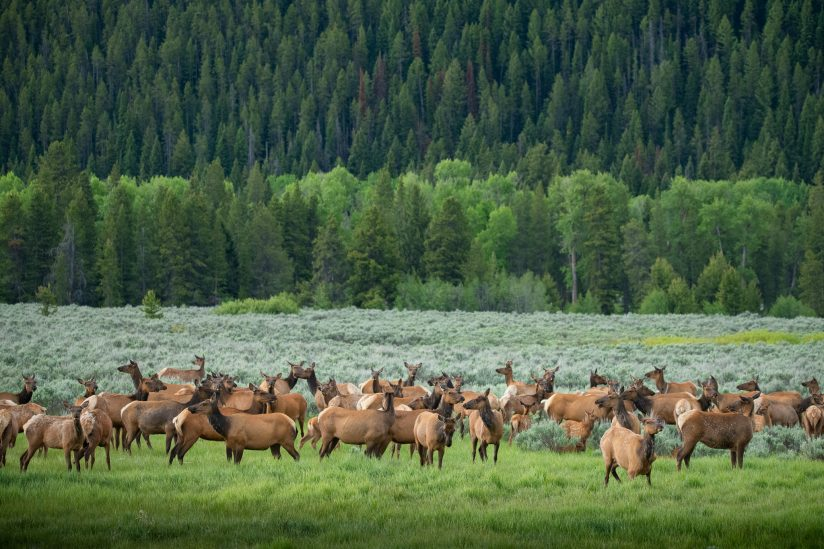Lines and Elk