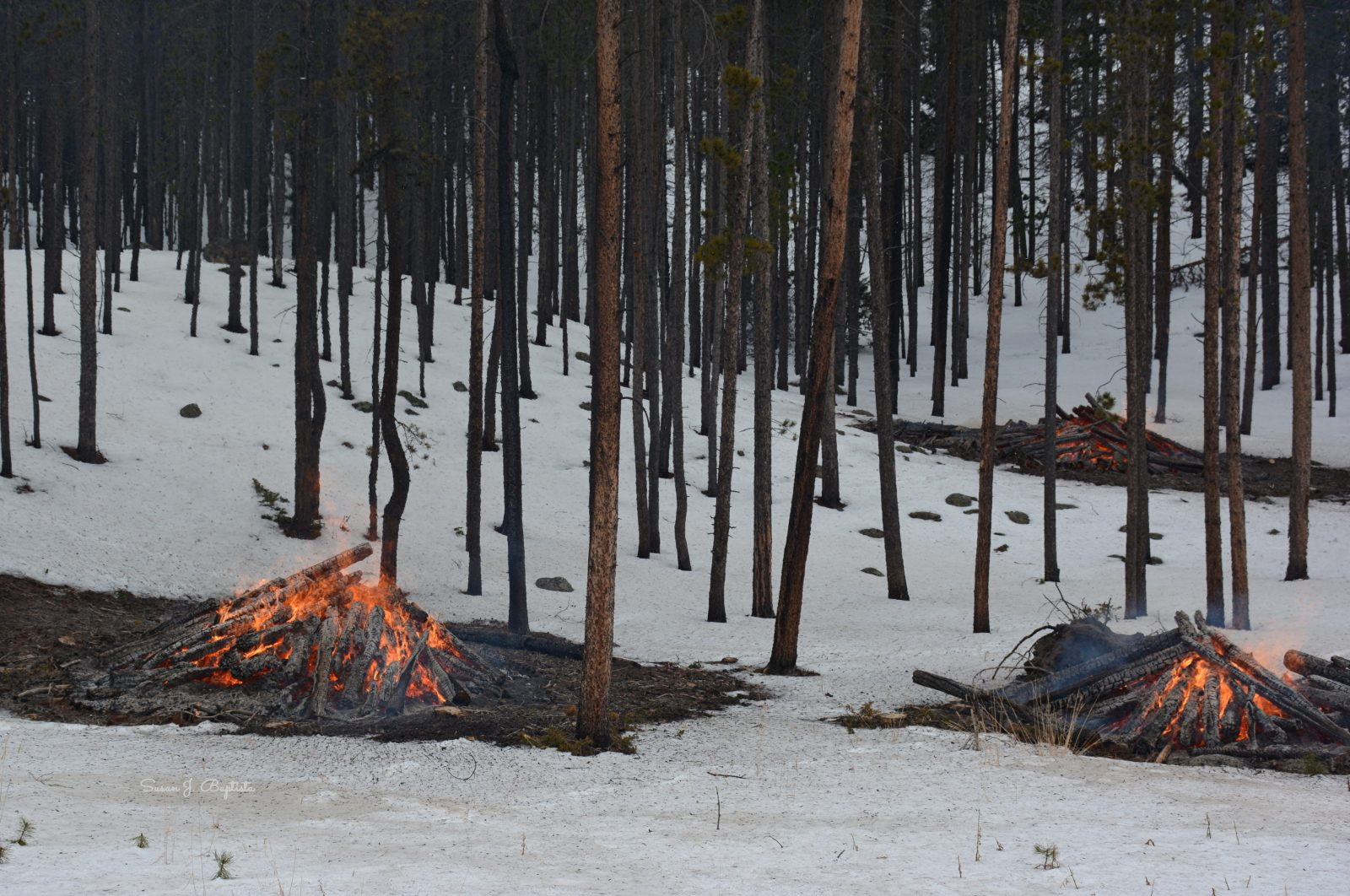 Controlled Burn Rocky Mtn. National Park