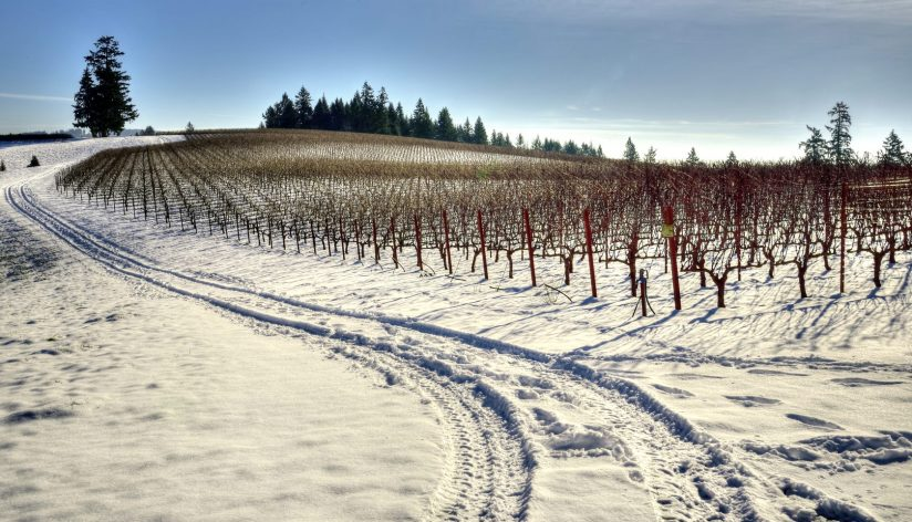 Soter Vineyard Winter
