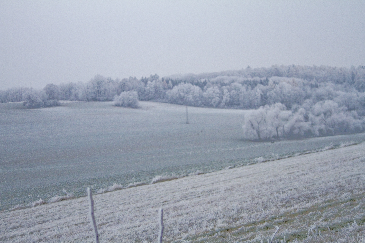 Fields in blue freezing fog