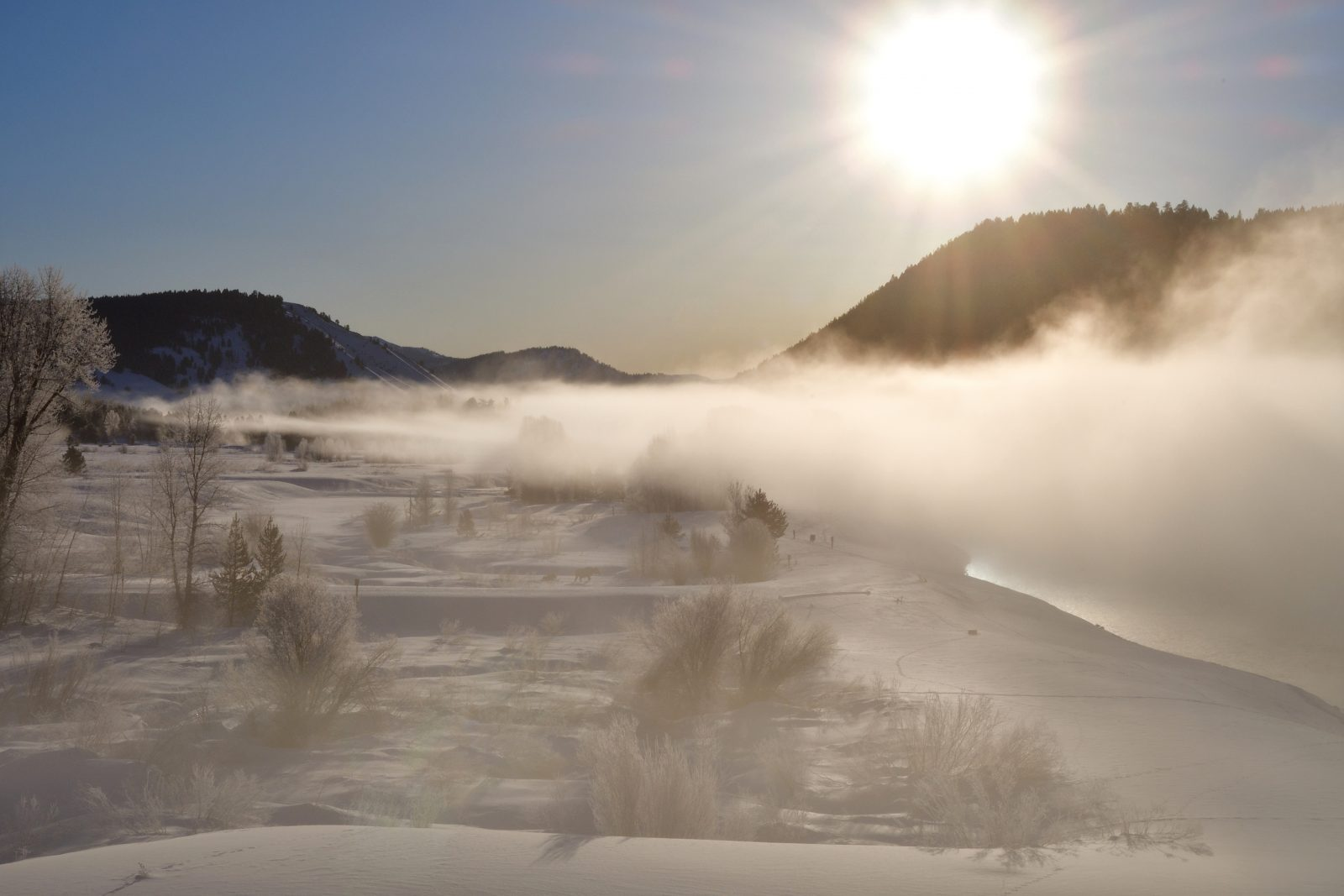 Morning Mist…. Can You Find The Moose?