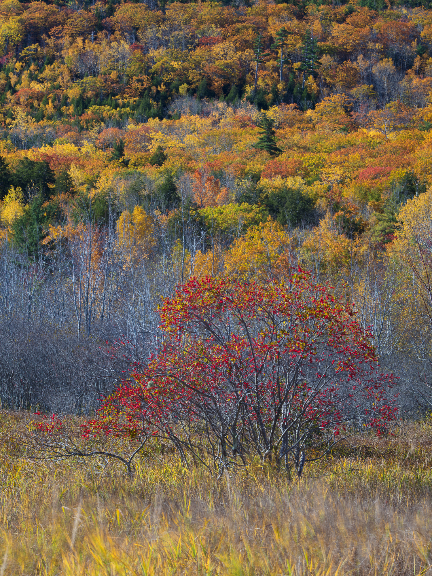 Colors of Acadia #1