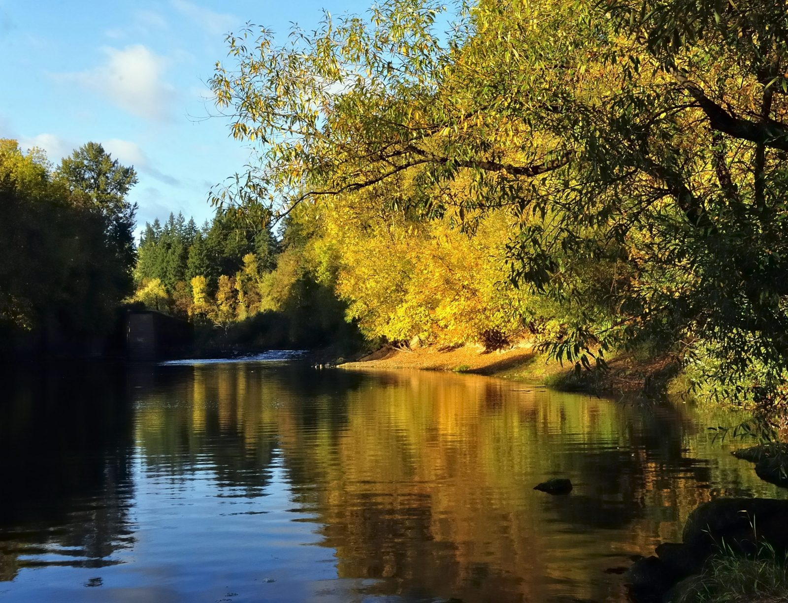 Yamhill River Reflection