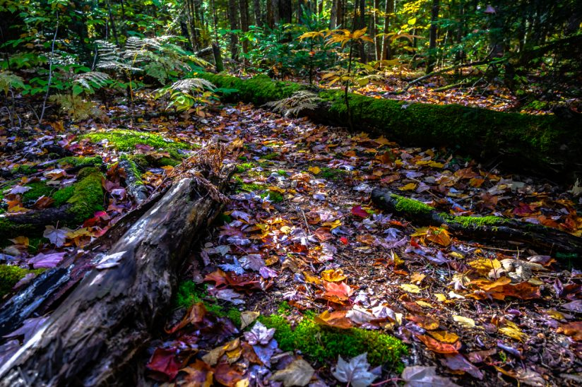 The Colors of the Forest Floor