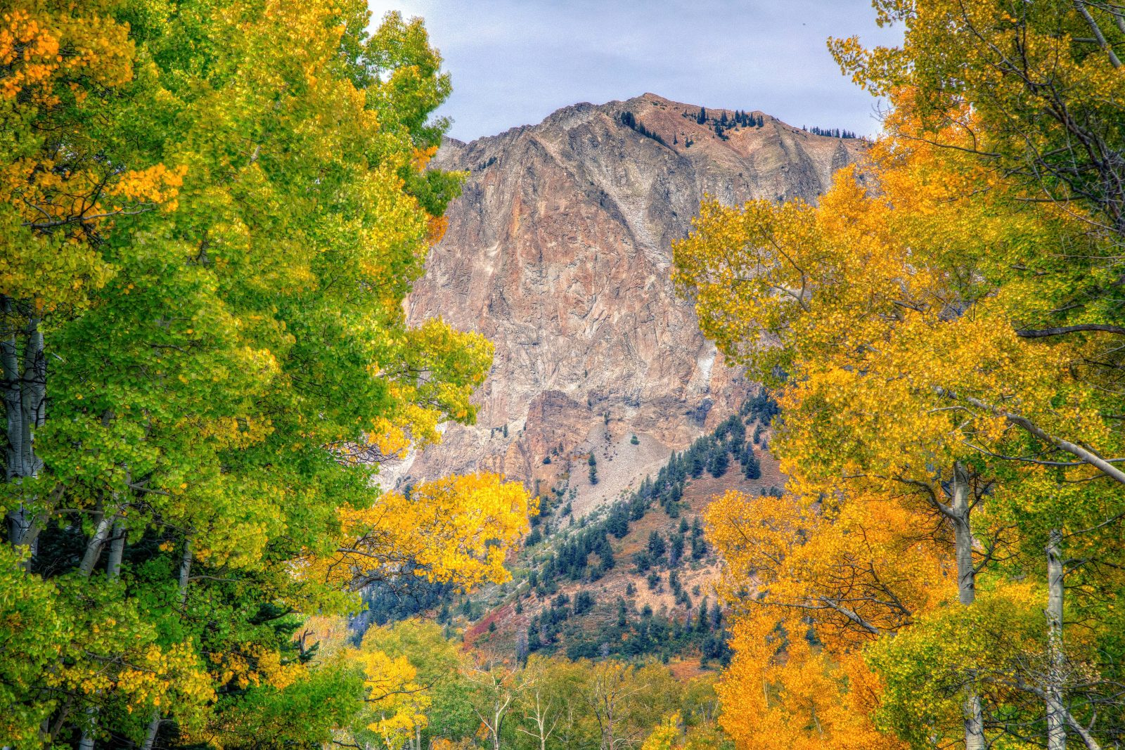 Fall Colors on Kebler Pass