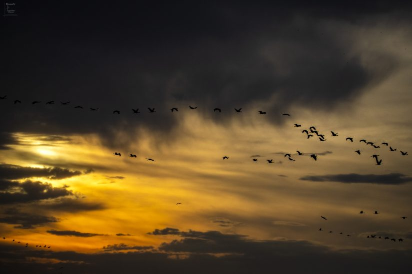 Cranes in the Clouds