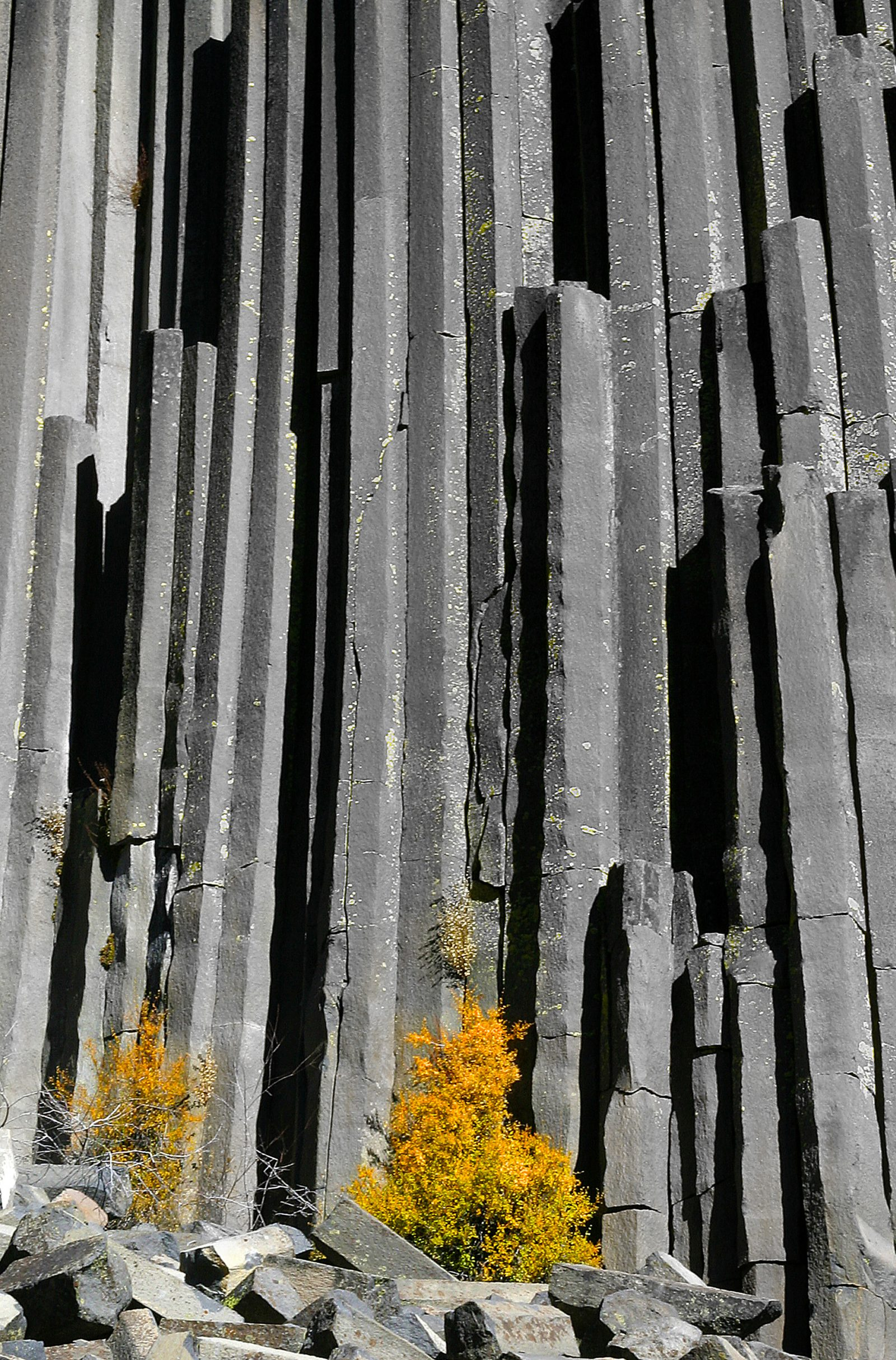 Devil's Postpile and yellow tree