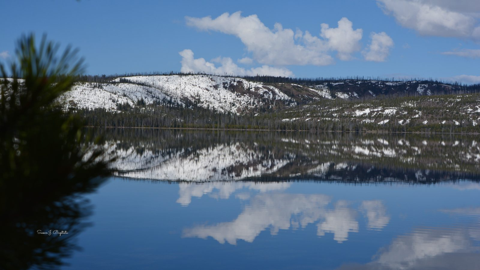 Yellowstone Reflection